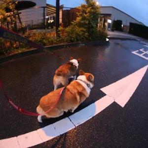 雨散歩・・・