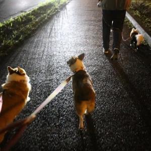 雨上がりの散歩@『おかき』リベンジ