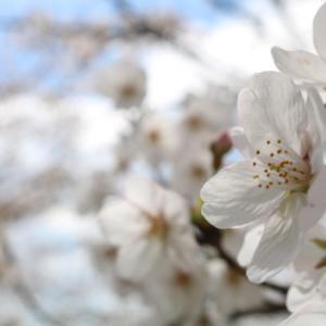 春はカラフル 自然の色に癒される♡