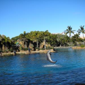 イルカショーは江ノ島水族館から・・・