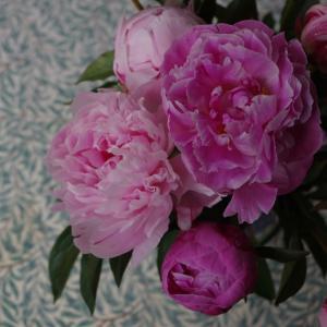 心にしみる芍薬の花