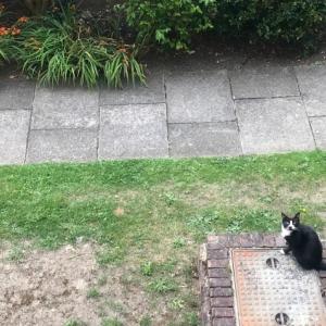 近所の猫さんと見つめ合う