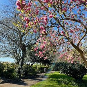 春のテムズ川沿い散歩