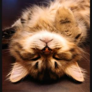 寝る… ★ 豆蔵です!