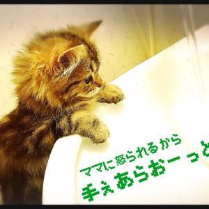 "B'z ""HOME"" session ★ 2人が伝えたいこと"
