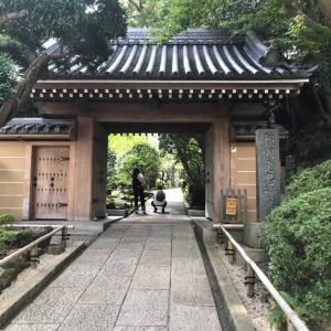 報国寺の竹の庭 ★ 最高の癒し