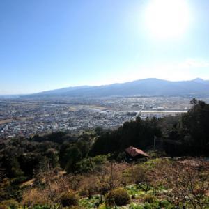 大井松田の河津桜祭り