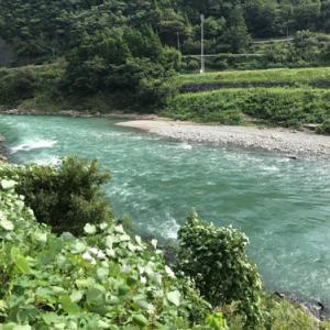 球磨川入りするも空気は冷たく望みは薄く尺鮎は絶望的かも ・・