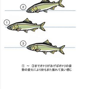ビギナーの為の鮎釣り教室!友釣りの基本!