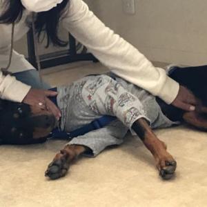 イザッという時愛犬の命を守るために!