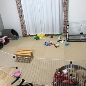 子犬が伸び伸び育つための環境