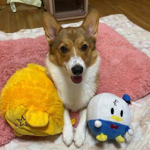 ポッキーちゃんのホームステイ日記②