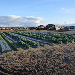 第2菜園の風景です