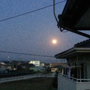 早起きして…西に入る月スーパームーン