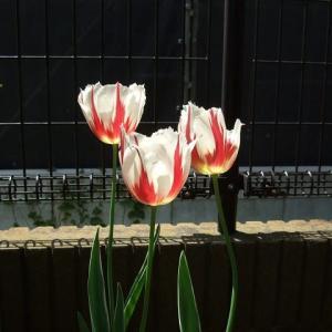 手入れのできない庭の花