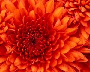 感性を高めて個性豊かに〜橙〜バイタリティーの補給