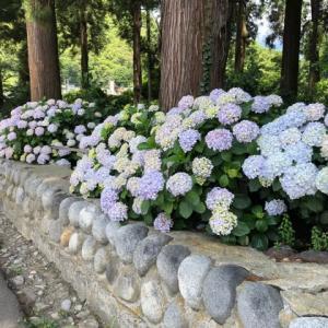 花のお寺 放光寺