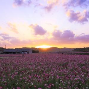 ピンク色の朝