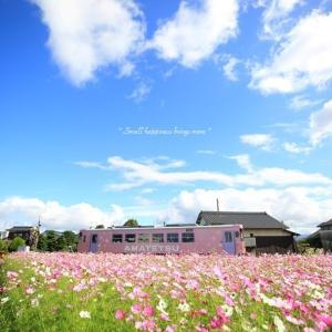 秋桜 × 電車 vol.1