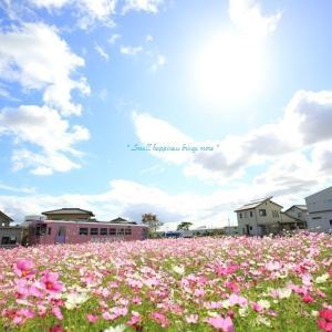 秋桜 × 電車 vol.2