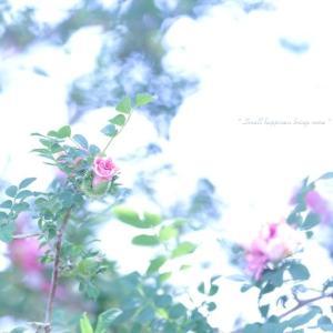 初夏の花たち vol.5