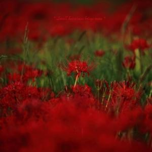 秋の紅 vol.1