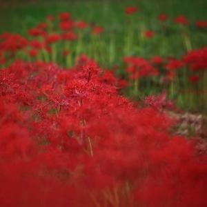 秋の紅 vol.2