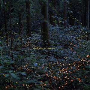 神秘の森へ