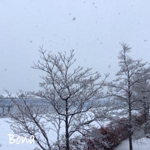 ボナちゃんと3月の雪だるま