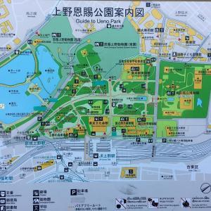 上野公園の地上絵