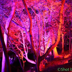 栗林公園『光の祭』~その3~