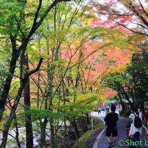 豪渓の紅葉~その2~
