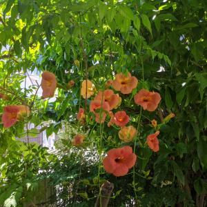 庭の木に綺麗な花が。