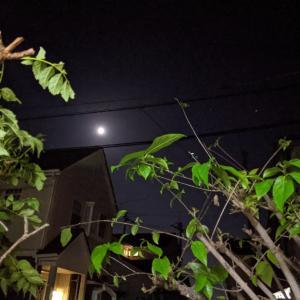 庭から月を。まだまだ変われない自分。(笑)