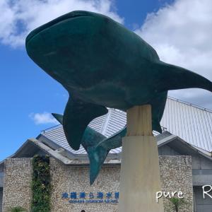 美ら海水族館で大満足☆ジンベイサメ