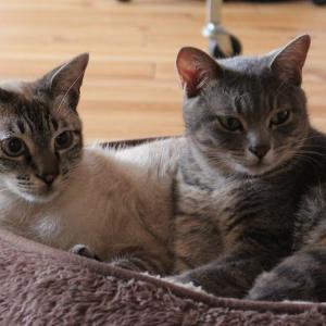 子猫兄妹 1歳になりました。