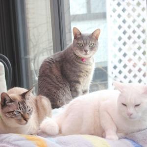 猫虐待のニュース 胸がつぶれる思い・・・・