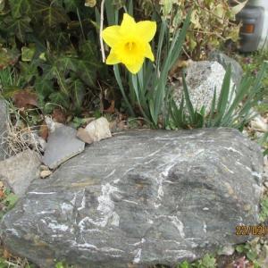 身近に「春」を感じます