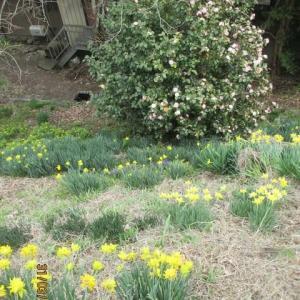 春近の里 で咲き始めた 花々