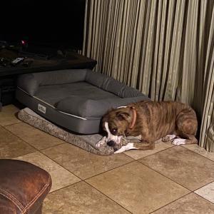 犬との生活と信頼関係。