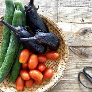 ★家庭菜園その後の様子とカンタン酢で簡単常備菜づくり