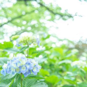 ★お城の展望台と紫陽花【動画あり】