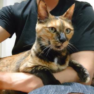 うちの猫が11歳になりました。