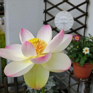 横浜・星川 杉山神社の年越の祓と2020年振り返り