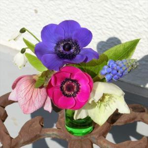 早春の花たちとハスの植え替え
