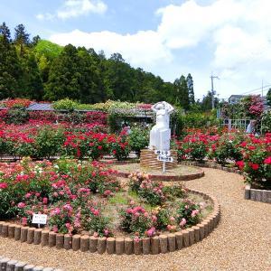 バラ庭園に薬草風呂 パラダイスなお寺 西国薬師 第2番 霊山寺(1)