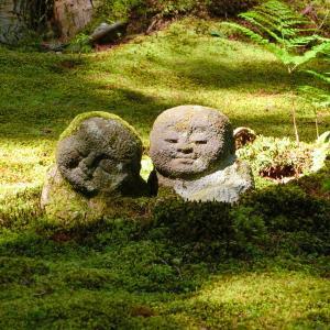着生植物の石斛(セッコク)が咲いていました 西国薬師 第45番 三千院門跡