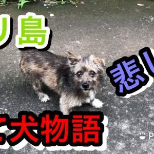 バリ島捨て犬物語「階段のわんこ」4本足のお友達 Vlog