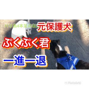 バリ島 元保護犬ぷくぷく君一進一退の日々 Vlog