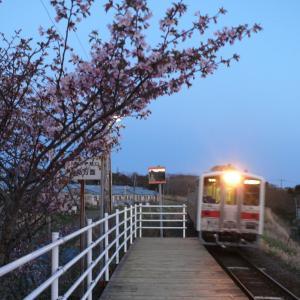 花咲線東根室駅の桜とルパン三世ラッピングトレイン